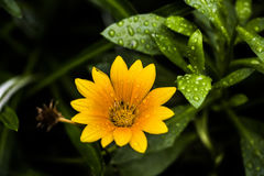 Macro Pictures of Flowers Royalty Free Stock Photography
