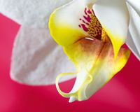 Macro pictures from the flowers of an orchid Royalty Free Stock Images