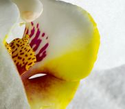 Macro pictures from the flowers of an orchid stock photo