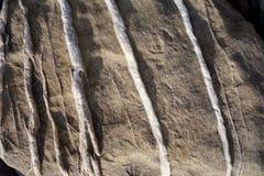 Macro pietra con le vene alzate del quarzo Fotografie Stock