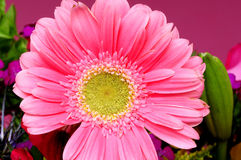 Macro Pink Flower. Macro of a pink blossom over a pink background Stock Photography