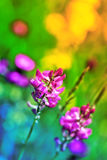 Macro from a pink flower. Selective focus Stock Image