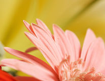 Macro of pink flower Stock Photography