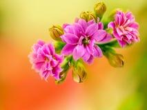 Macro of pink flowers stock photos