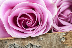 Macro Pink Rose on Wood Stock Images