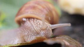 Macro plan rapproché d'escargot