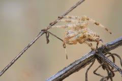 Macro plan rapproché d'une araignée Images libres de droits