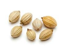 Macro plan rapproché des graines de coriandre sèches organiques Photo stock