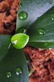 Macro Plant Royalty Free Stock Photography