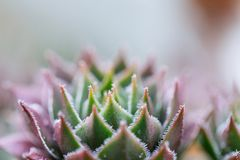 Beautiful Macro plant Royalty Free Stock Images