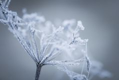 Macro of plant with rime. Royalty Free Stock Photo