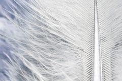 Macro plumage de fond de plume photo stock