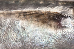 Macro poissons d'aileron, petit fond d'art de poissons Image stock