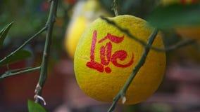 Macro pomelo decorato con l'iscrizione che simbolizza felicità stock footage