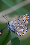 Macro portrait of a butterfly royalty free stock image