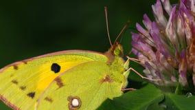 Macro portrait d'un papillon coloré Photos libres de droits