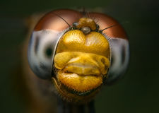Macro portrait of a Dragonfly - stock photo Stock Image
