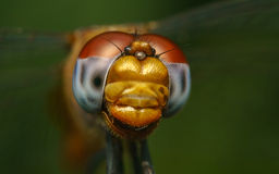 Macro portrait of a Dragonfly - stock photo Stock Photo
