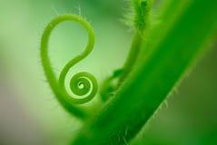 Macro pousse de pousse verte Image libre de droits