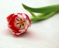 Macro próximo acima da flor cor-de-rosa Foto de Stock Royalty Free