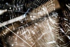 Macro próximo acima de uma Web de aranha Fotografia de Stock Royalty Free