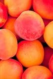 Macro primo piano di rosso arancio delle pesche fresche delle albicocche sul mercato Fotografia Stock