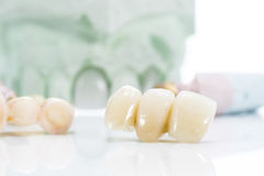 Macro of prosthetic teeth on a white background Stock Image