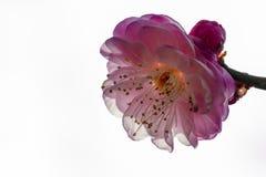 Macro prune Image stock
