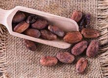 Macro punto di vista dei fagioli crudi del cacao sopra il fondo della tela Immagine Stock