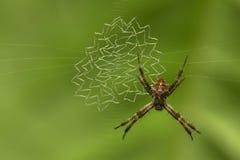 Macro punto di vista del primo piano del ragno che riposa sulla ragnatela con il fondo scuro del bokeh fotografia stock libera da diritti