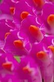 Macro purpere bloemen Stock Afbeelding