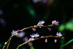 Macro purple flower. With bokeh Stock Photo