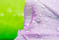 Macro purple flower with bubble on green blurred background Stock Images