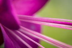 Macro of a purple flower. With shallow depth of field and strong leading lines stock photos