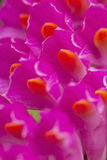 Macro purple flowers Stock Image