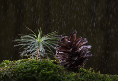 Macro of rain at fir forest Royalty Free Stock Photos