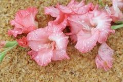 Macro raindrop on flower, gladiolus flower Stock Photo