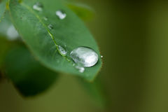Macro raindrop on leaf Stock Image