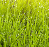 Macro of raindropon the grass. Stock Photos