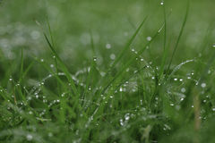 Macro Raindrops on Grass Stock Images