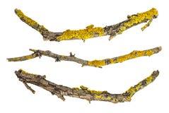 Macro rami di albero asciutti isolati su fondo bianco Fotografia Stock