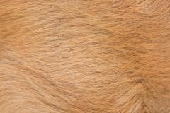 Macro red or brown dog hair fur texture. Animal dog fur abstract background. stock photography
