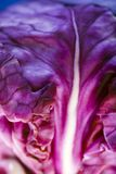 Macro of a red cabbage. royalty free stock photography
