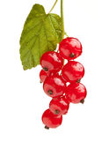Macro of red currant bunch with leaf Stock Photo