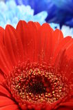 Macro of red flower and heart with pollen Stock Photos