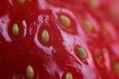 Macro with red fruit Stock Images