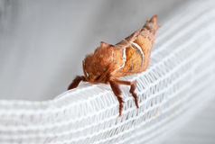 Macro of red moth enface Stock Images
