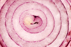 Macro of red onion Royalty Free Stock Photography
