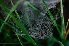 macro, ressort, araignée, frais, abstraite, Web image stock