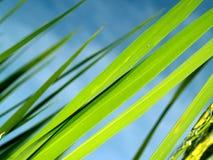 Macro Rice 5 Royalty Free Stock Photos